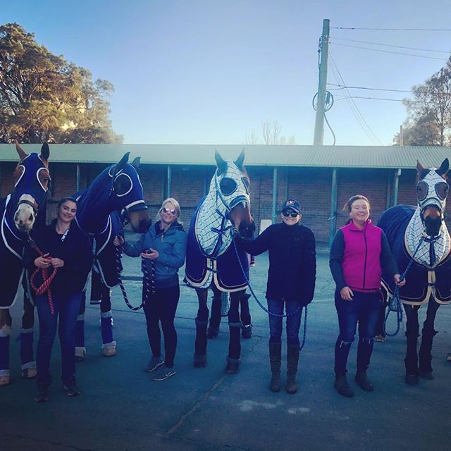 It's been a while but the Palomine team are out and about today shooting an exciting TVC at Rosehill Gardens.  Thanks to @baroonasporthorses for their expert assistance with this one.  #horsesofinstagram #horsemodel #tvc #ottb #thoroughbreds #thoroughbredsofinstagram #eventers #brightandearly #sydney