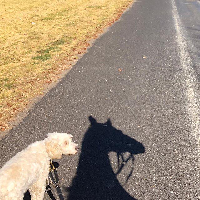 Huh?! #doghorse #dogsofinstagram #horsesofinstagram #shadowhunters #illusion #confusion