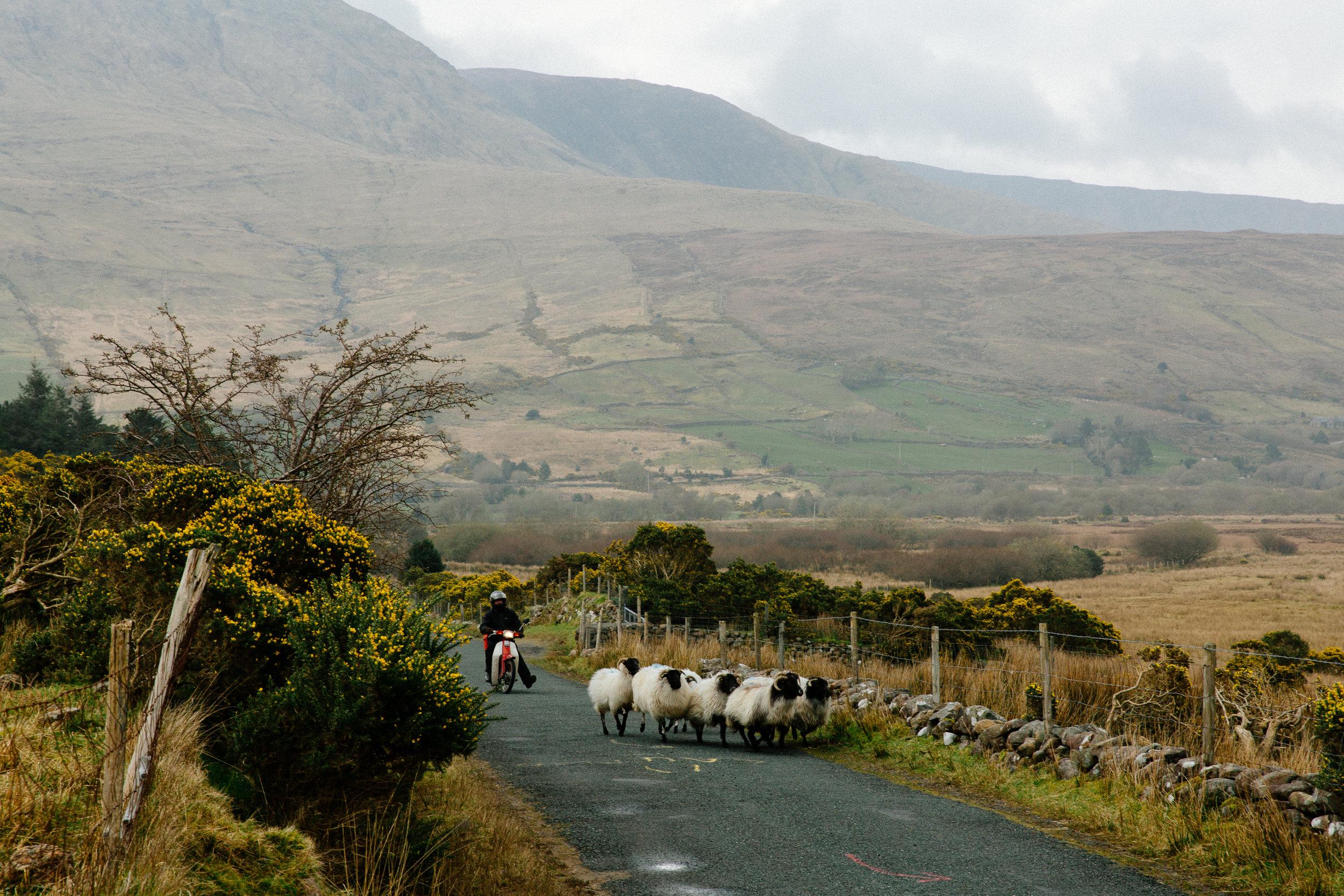 Jen_Montgomery_Photography_UK_Wales_Ireland_Iceland_FB-231.jpg