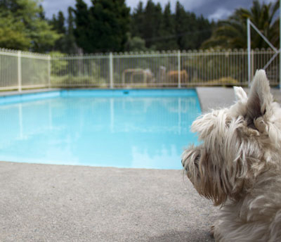 Pooch Policy   ...for our four-legged family members