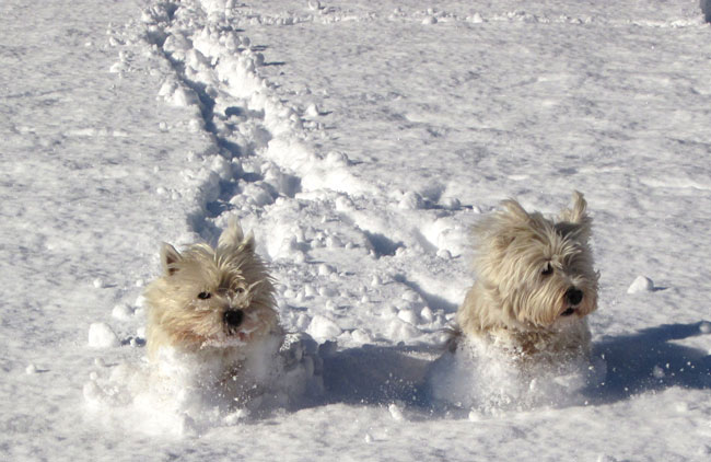 Mud-Brick-Cabin-dogs.jpg