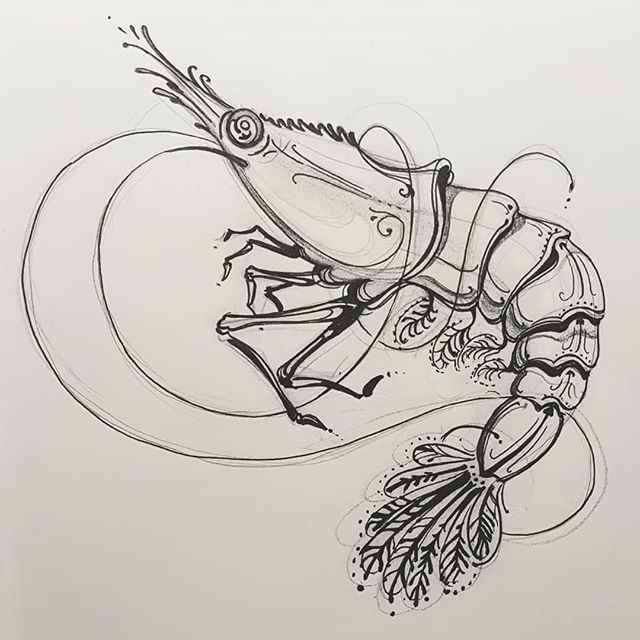 swirly shrimpy