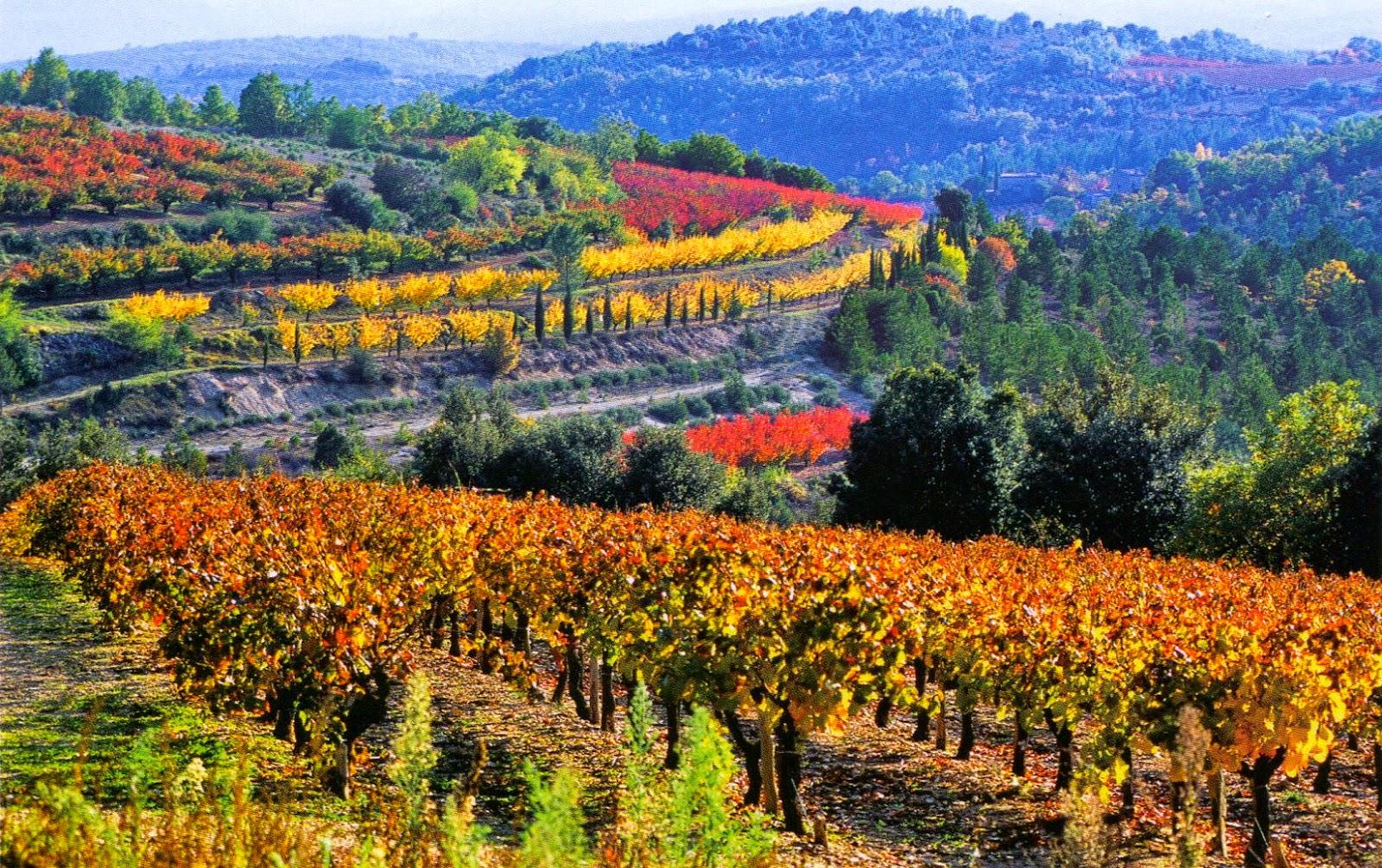 Provence Vineyardsě.jpg