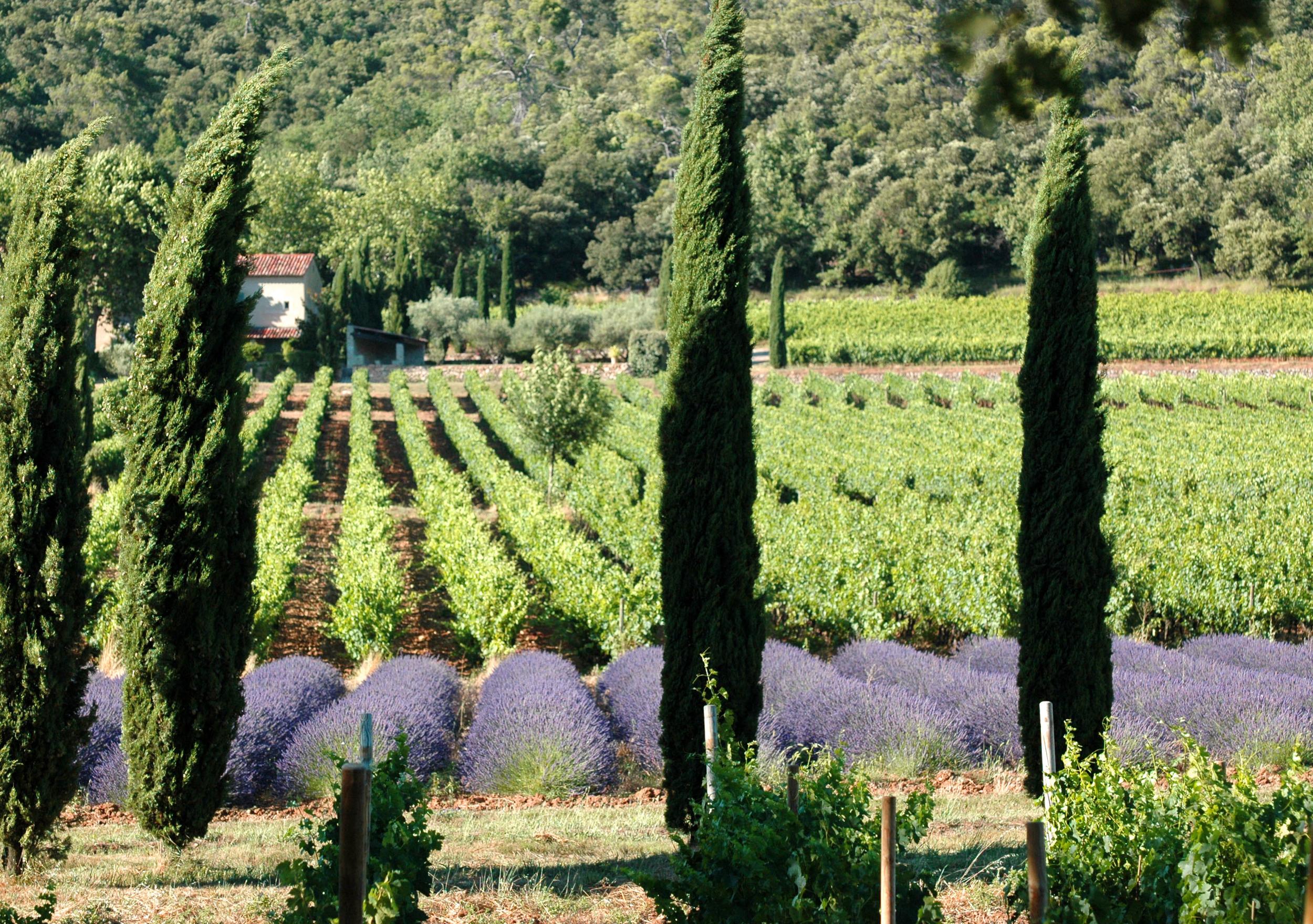 saint-medard-wine-provence-02