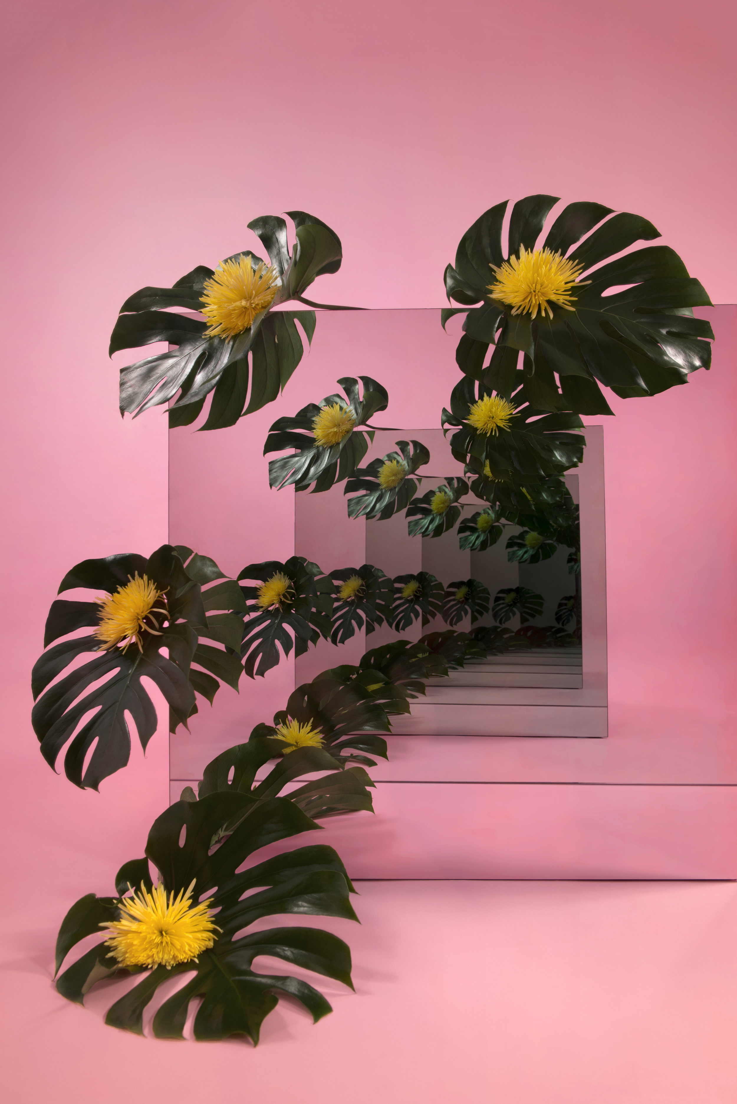 Yellow_Fronds_1.jpg