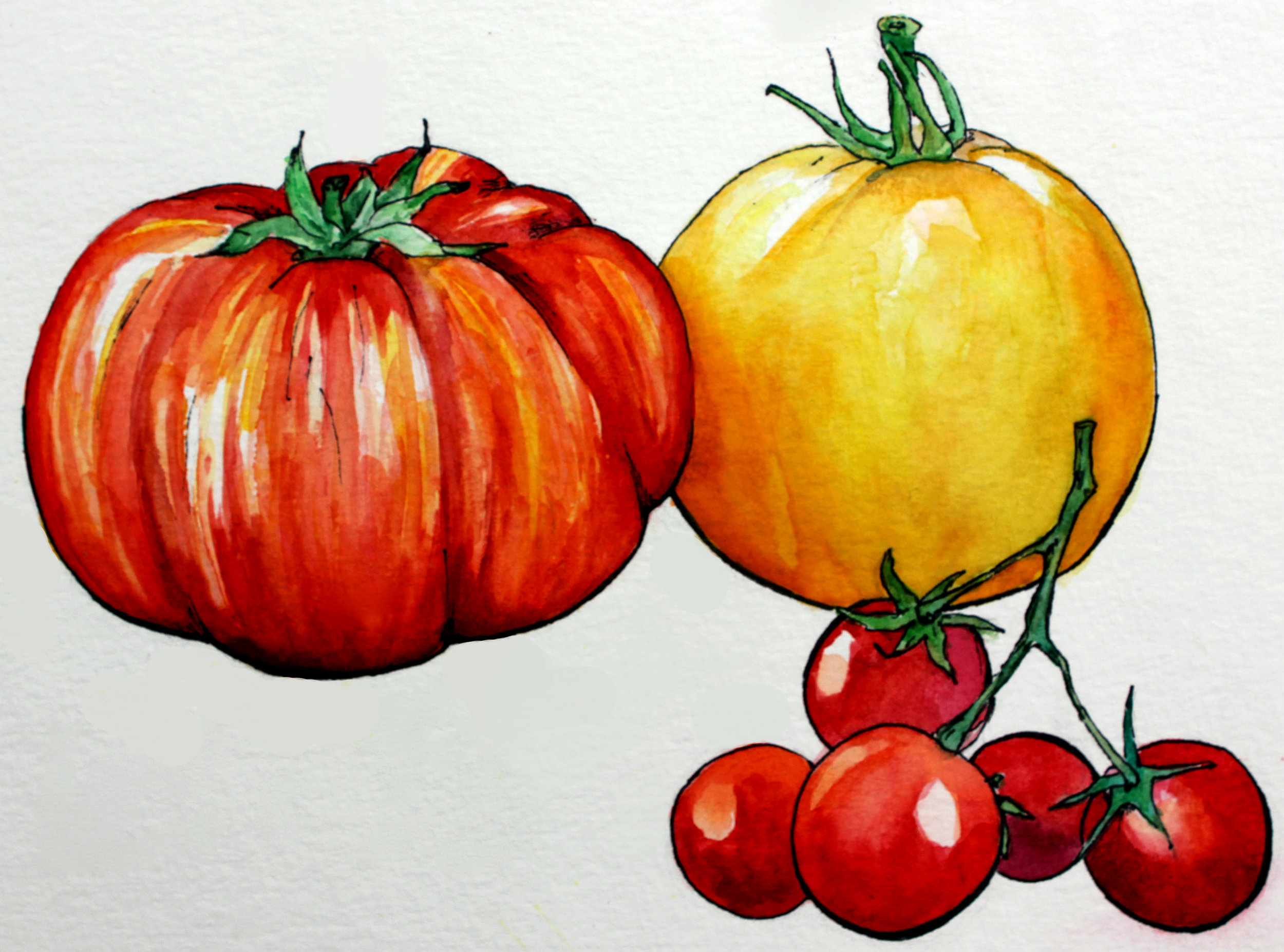 ink and watercolor tomatoes ashleychase.jpg