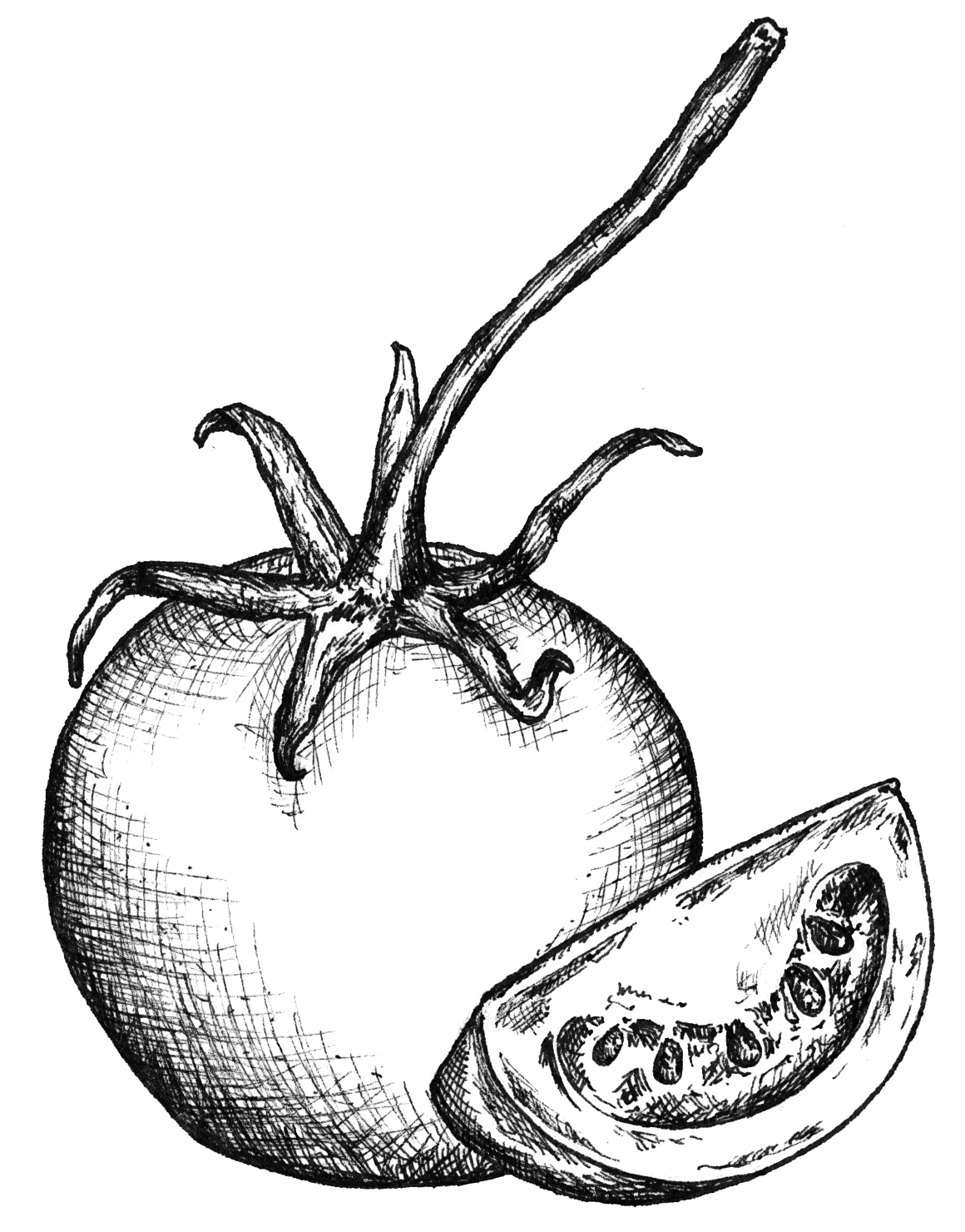 TOMATO LINEDRAWING.png