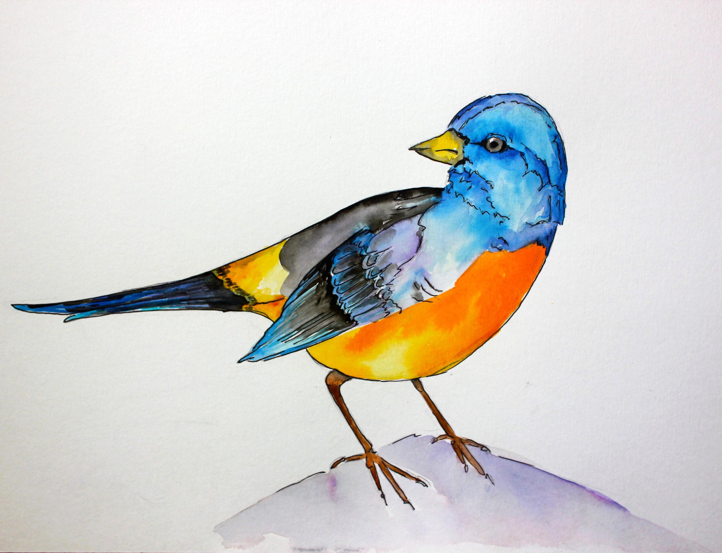Bird_watercolor_chase.jpg