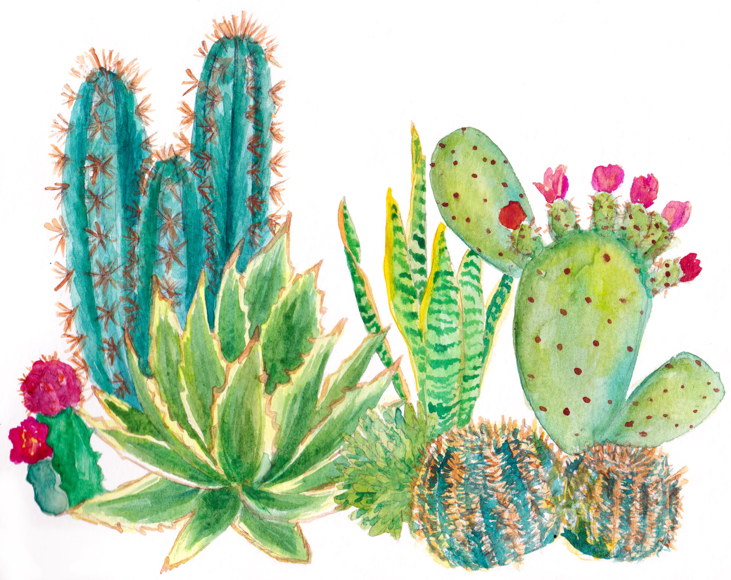 ASHLEYCHASE SUCCULENTS WATERCOLOR.jpg