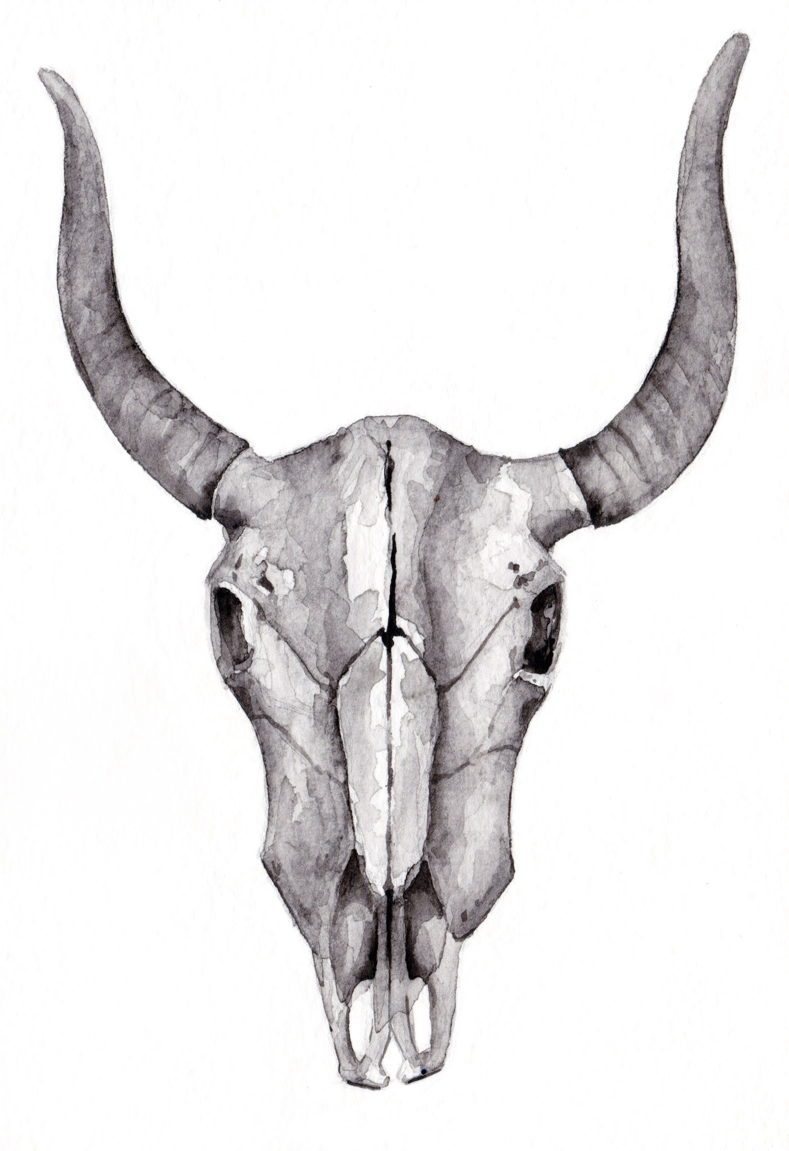 Bull skull .jpg