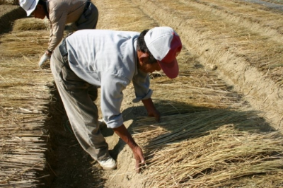 Photo: 참살이 농원
