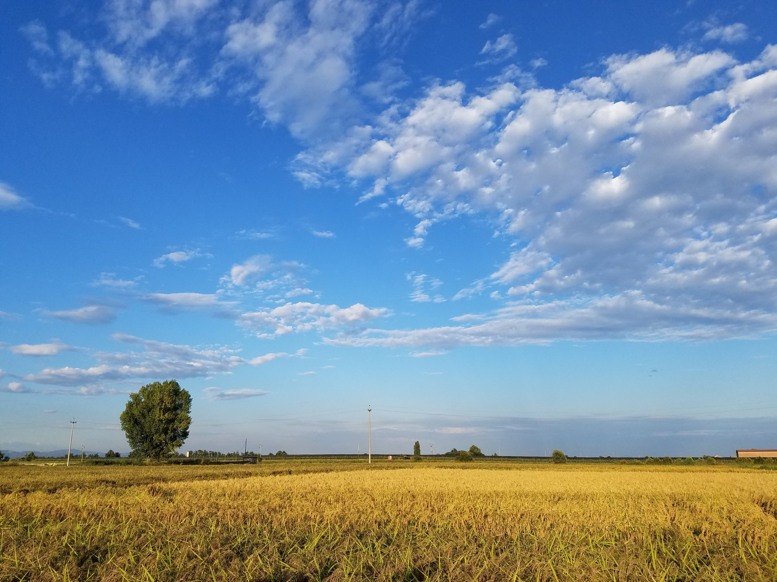 melotti farm_12.jpg