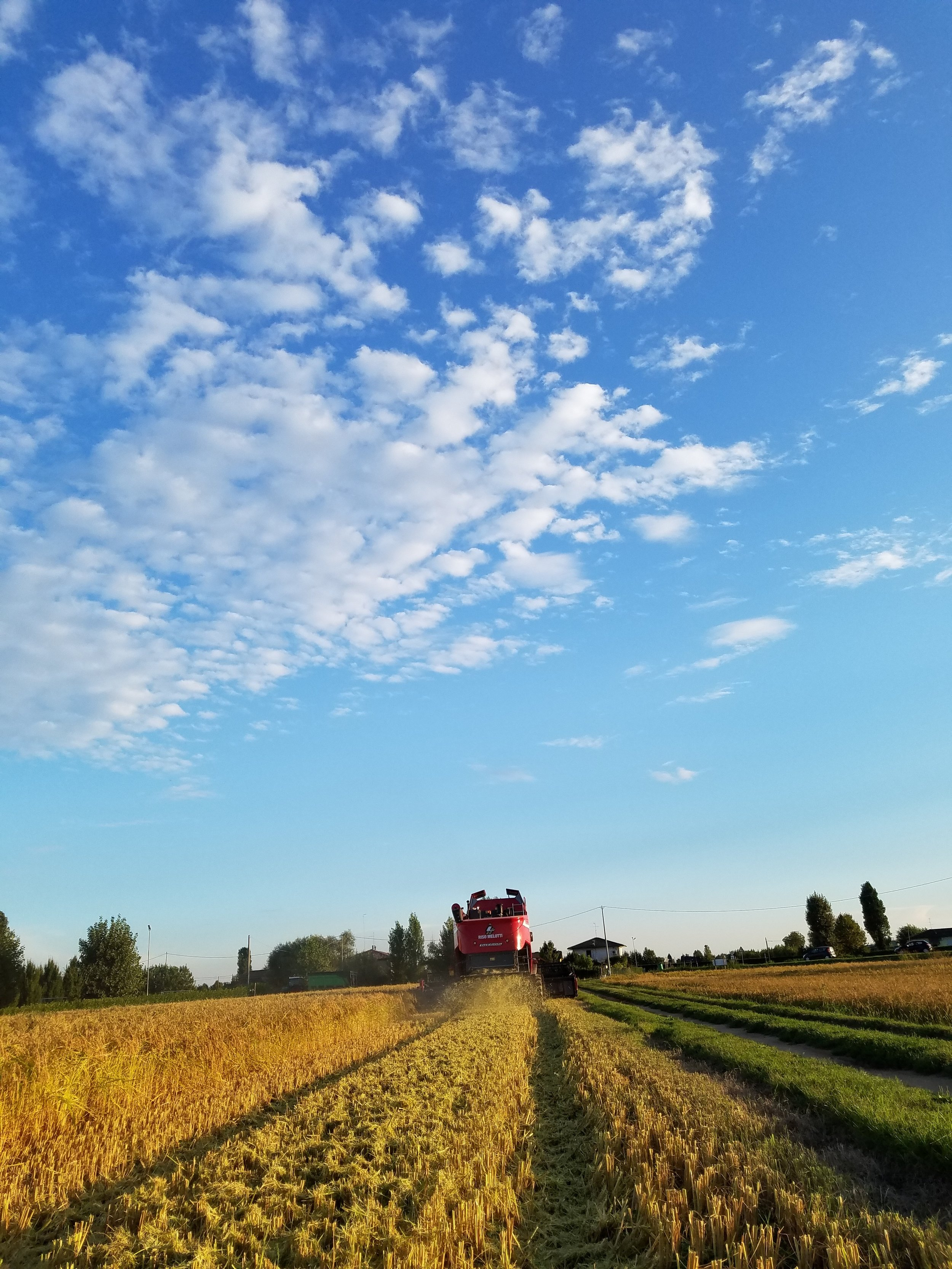 melotti farm_16.jpg