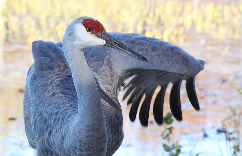 Medicine Crane