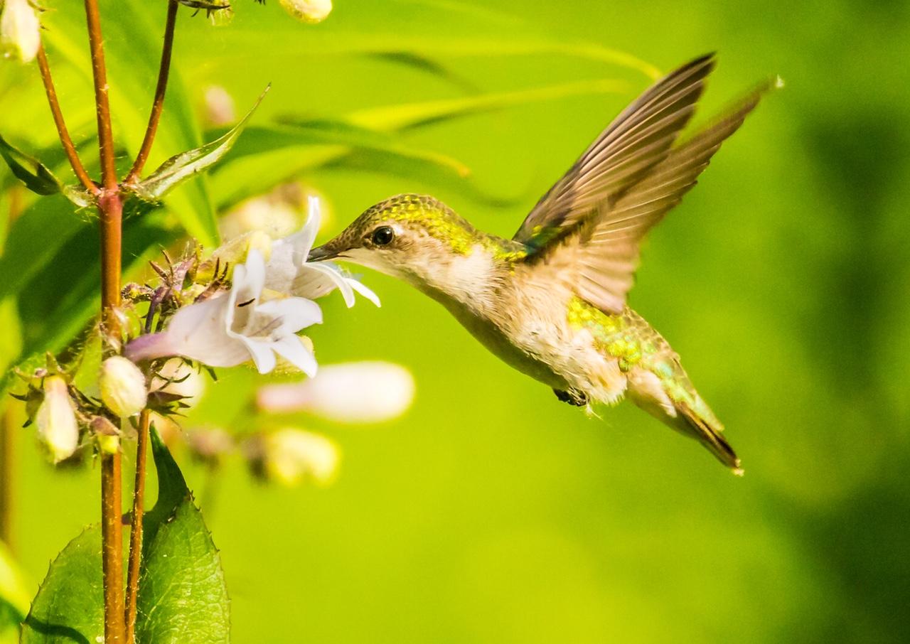Nectar of Life