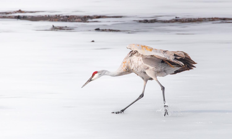 Cranes on Ice No. 2