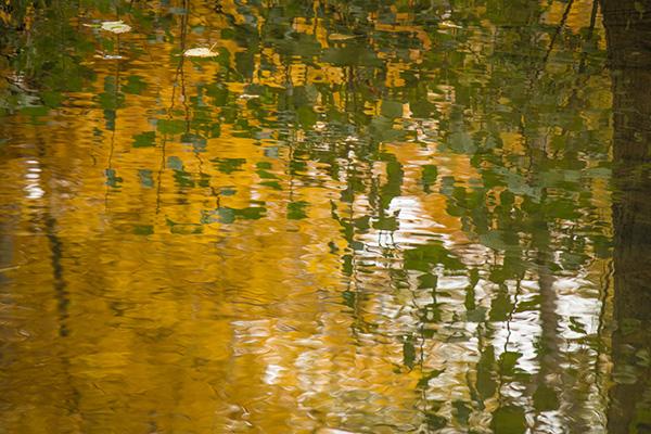 Liquid Light: Autumn Gold
