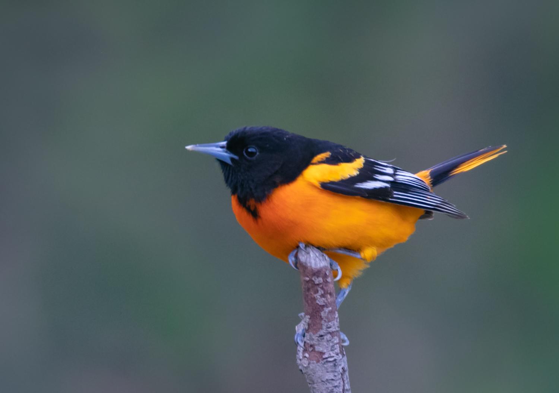 Birds (36)