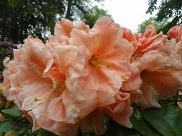 R. Orange Prelude