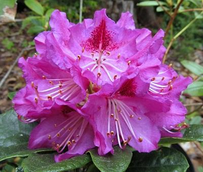 R. Wgutbey's Purple