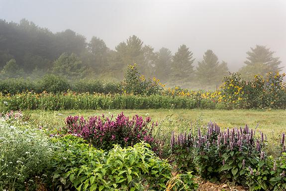 7085-farm-in-the-fog.jpg