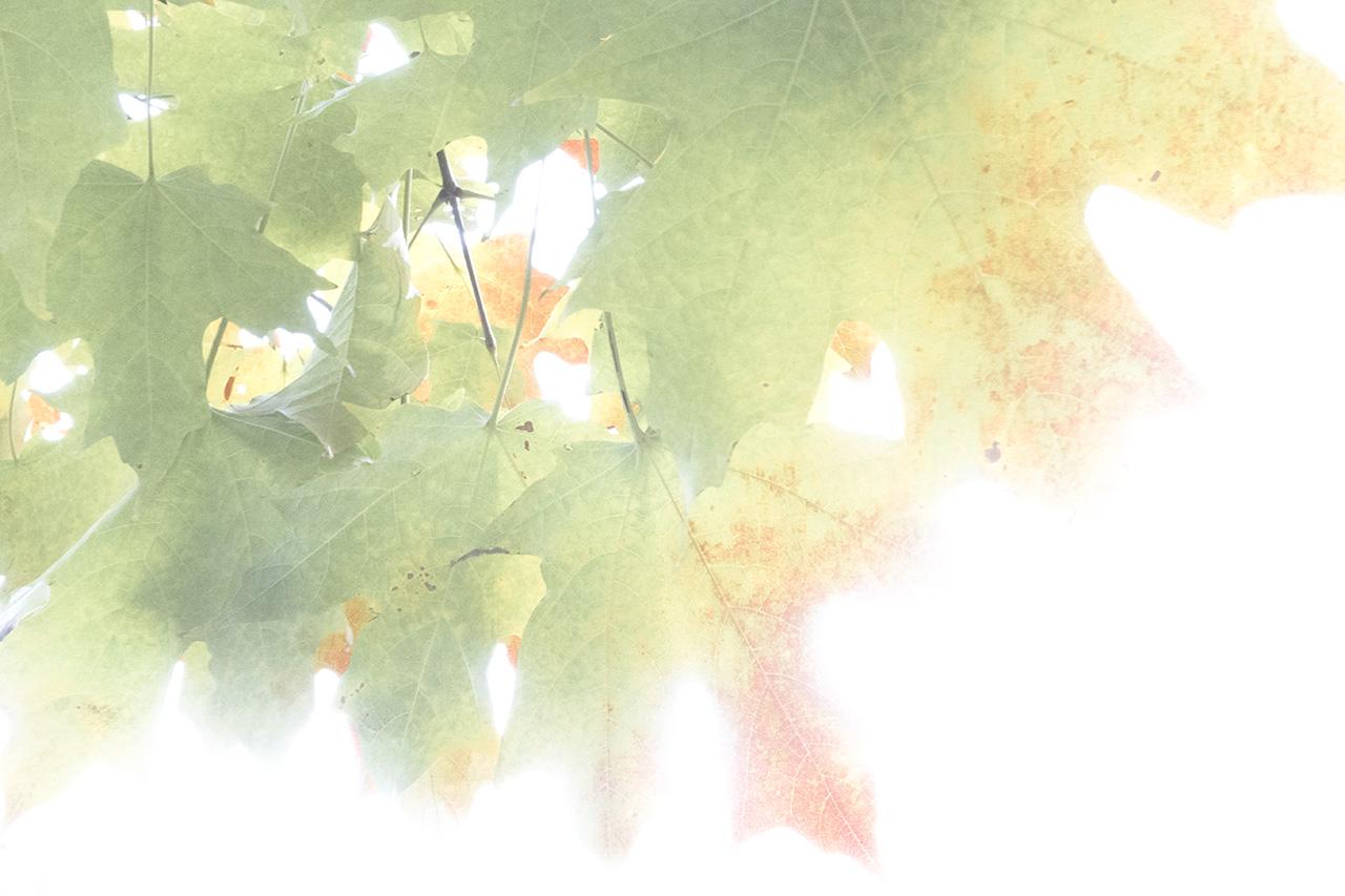 Autumn_10.30.2016-30-38-6_WEB.jpg