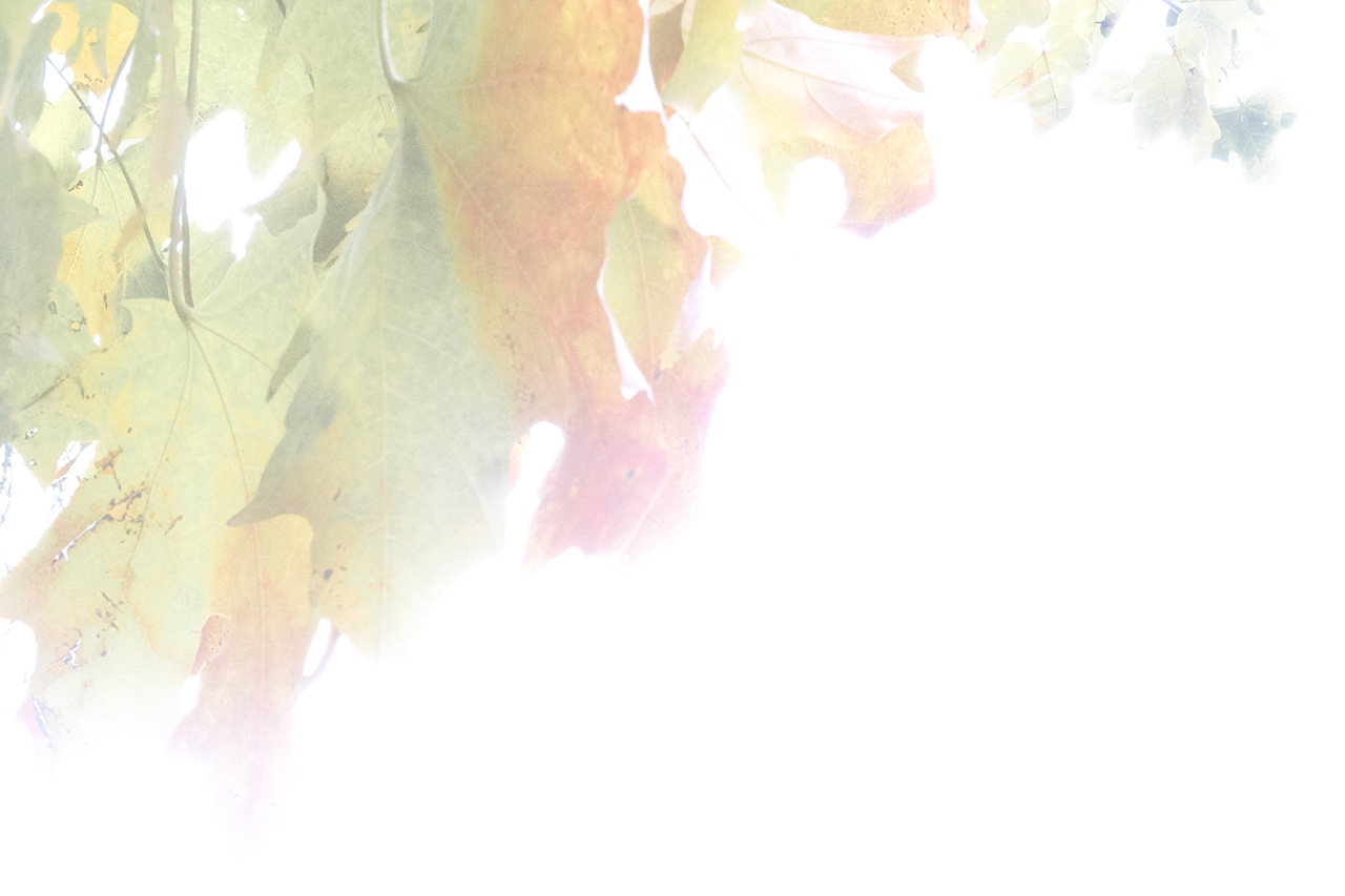 Autumn_10.30.2016-30-57-6_V2_WEB.jpg
