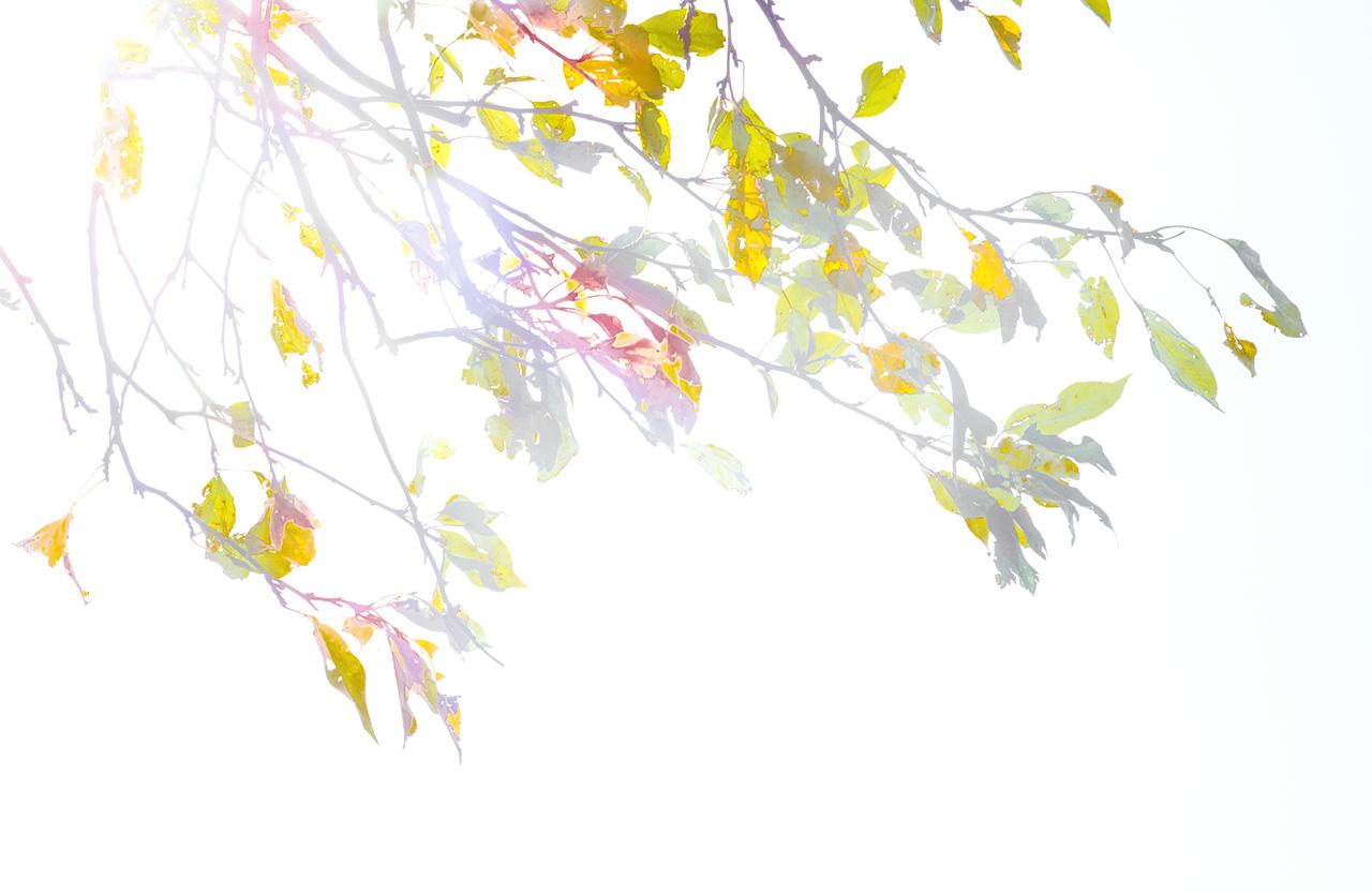 Autumn_Overexposed-0363_WEB.jpg