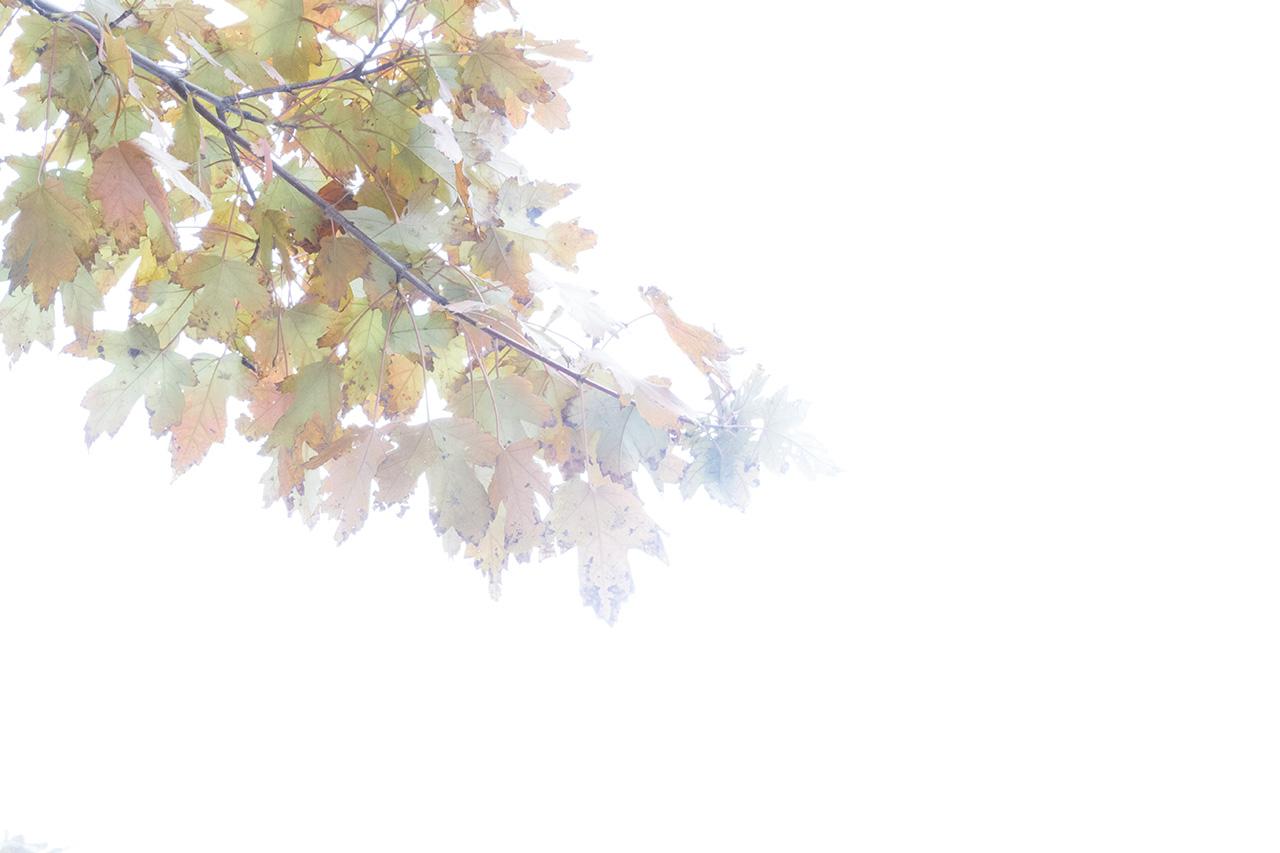 Autumn2016-0448_WEB.jpg