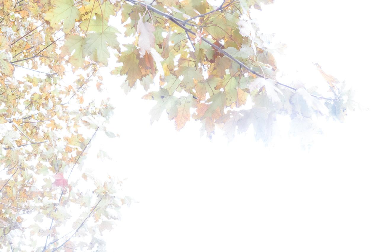 Autumn2016-0449_WEB.jpg