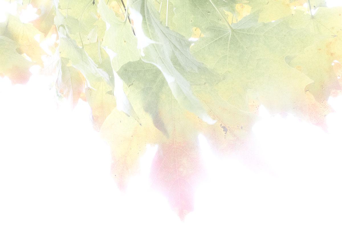 Autumn2016!-6_V2_WEB.jpg