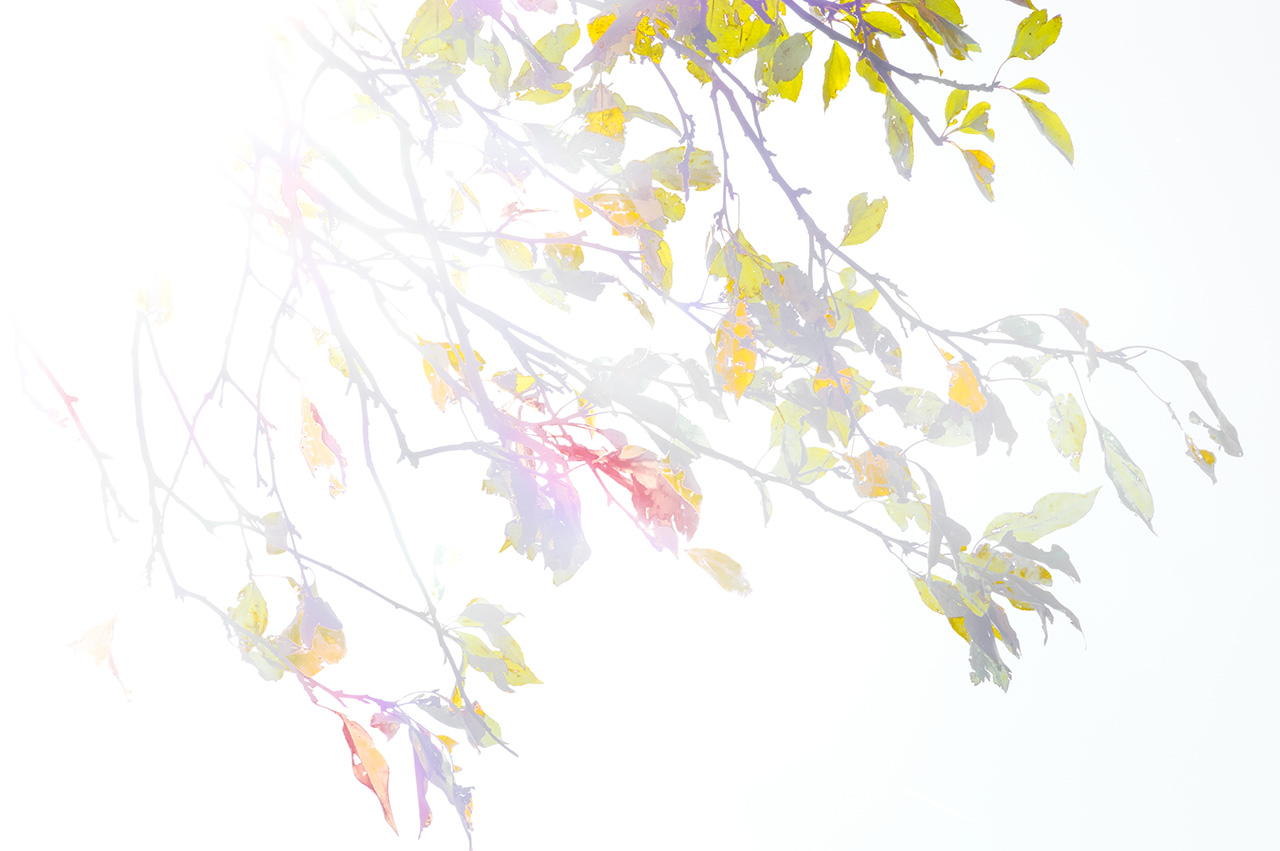 Autumn_Overexposed-0362_WEB.jpg