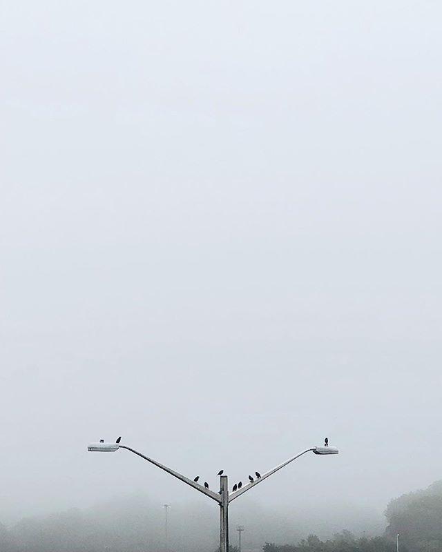 This weather is for the birds 🦆#rainydays #forthebirds #foggy #moody . . . #igexplore #tones #lookslikefilm #exploring #agameoftones #streetacticity #yngkillers #fatalframes #theimaged #createexplore #visualarchitects #moodygrams #justgoshoot