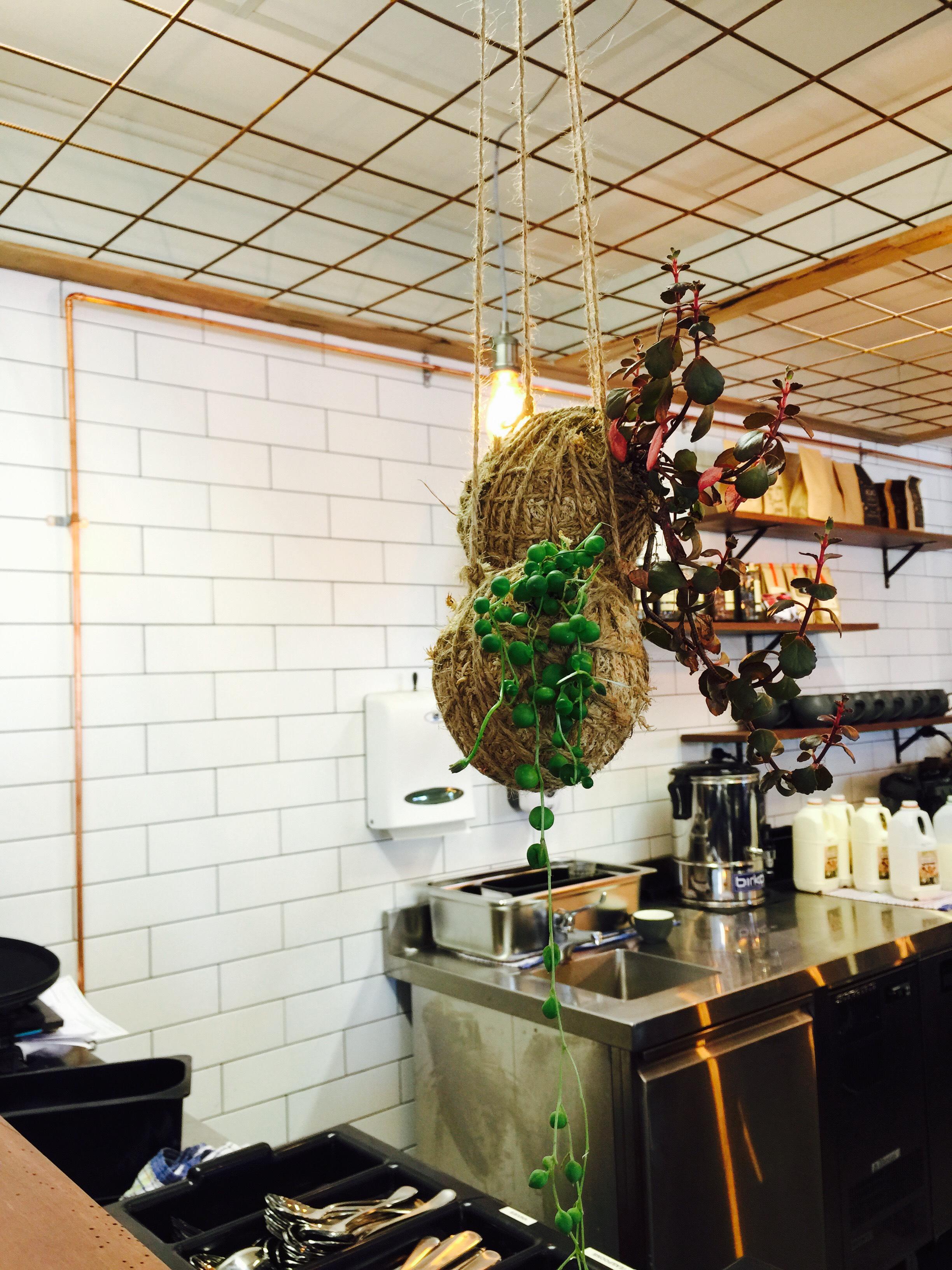 Bird Nest Co Kokenest Timber Cafe