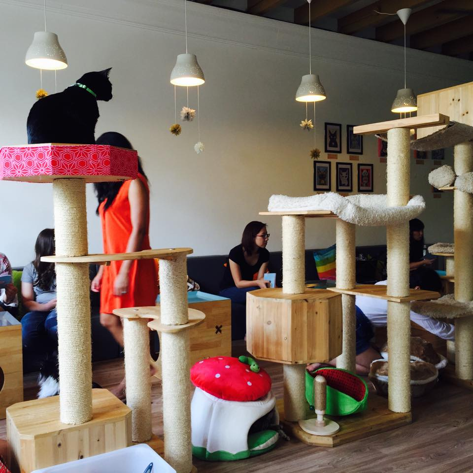 Busy Cat Cafe