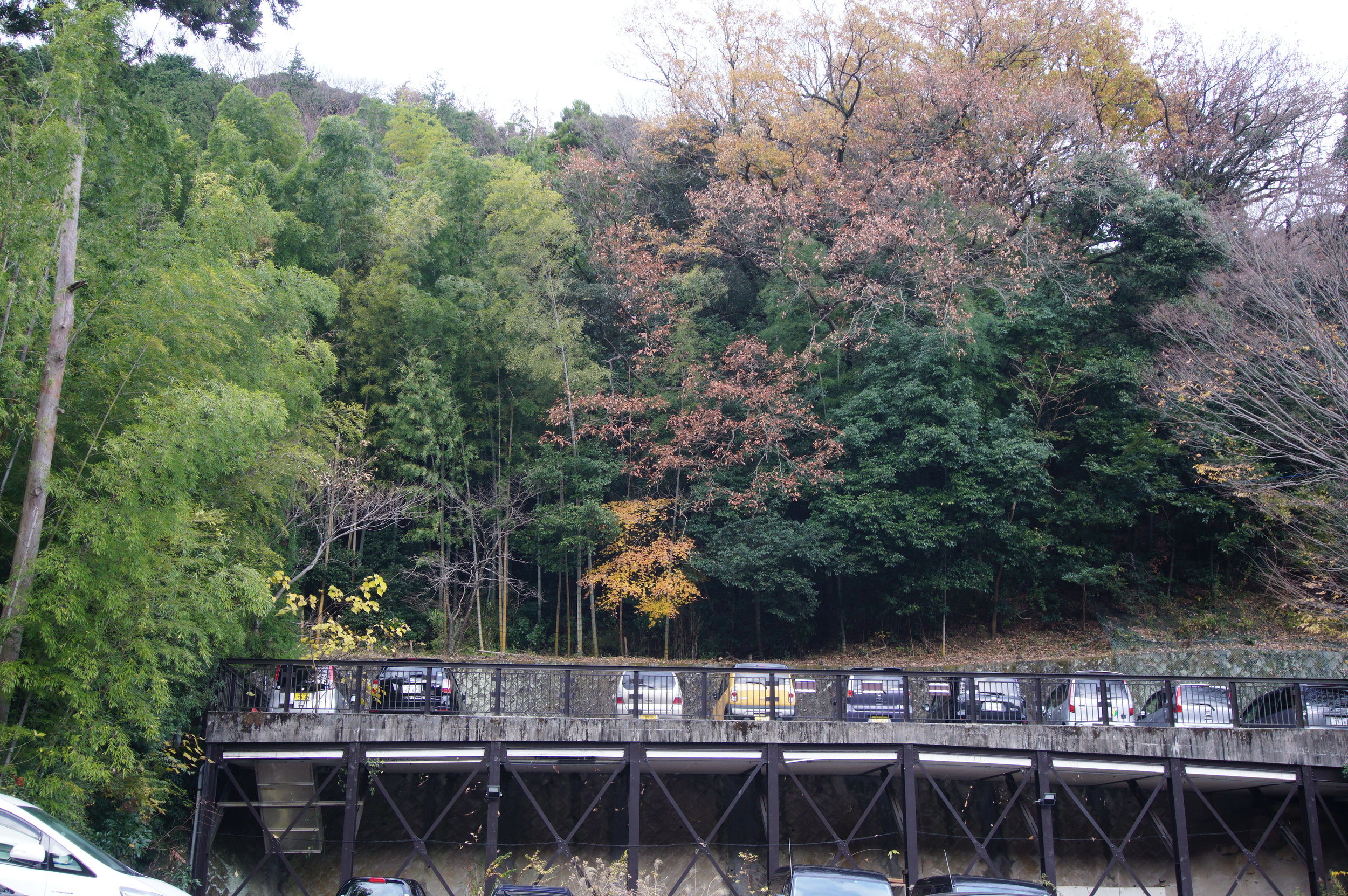 The view that surrounds our onsen.