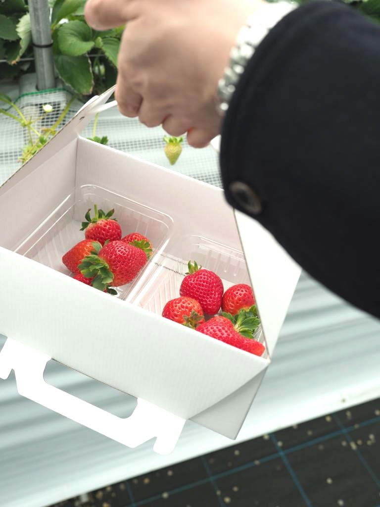 Takeaway Box Strawberry at Ichigo Kirari Fukuoka