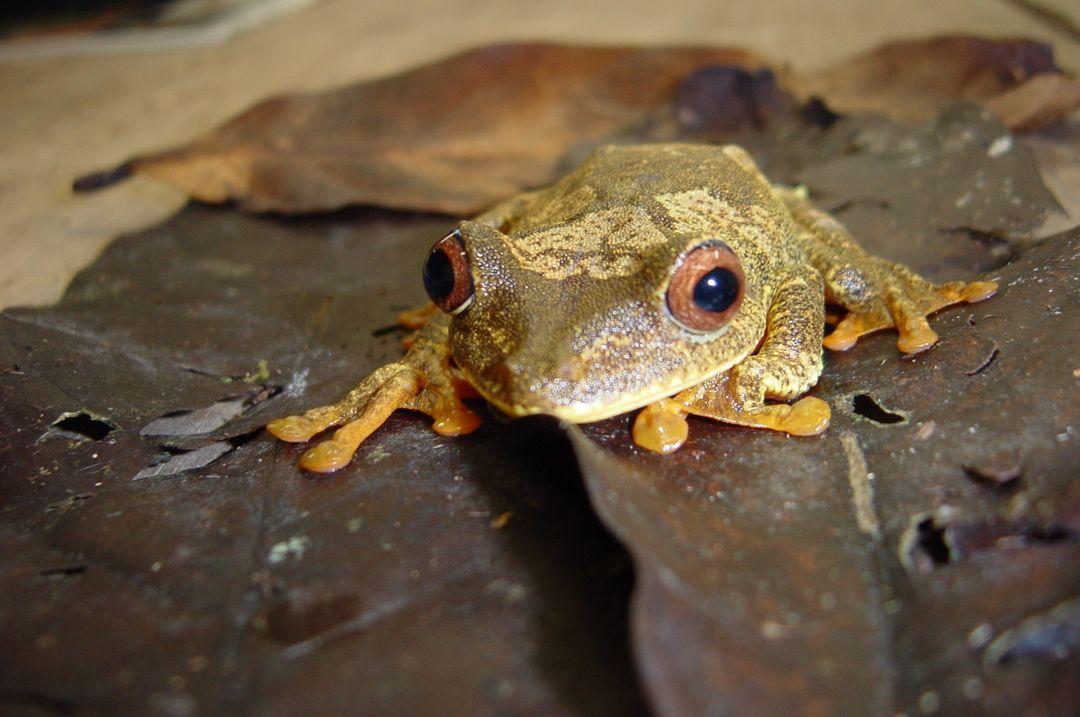 slides-frog-hyla.jpg