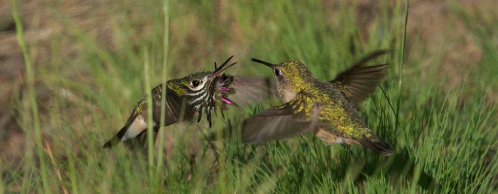 slides-hummingbird.jpg