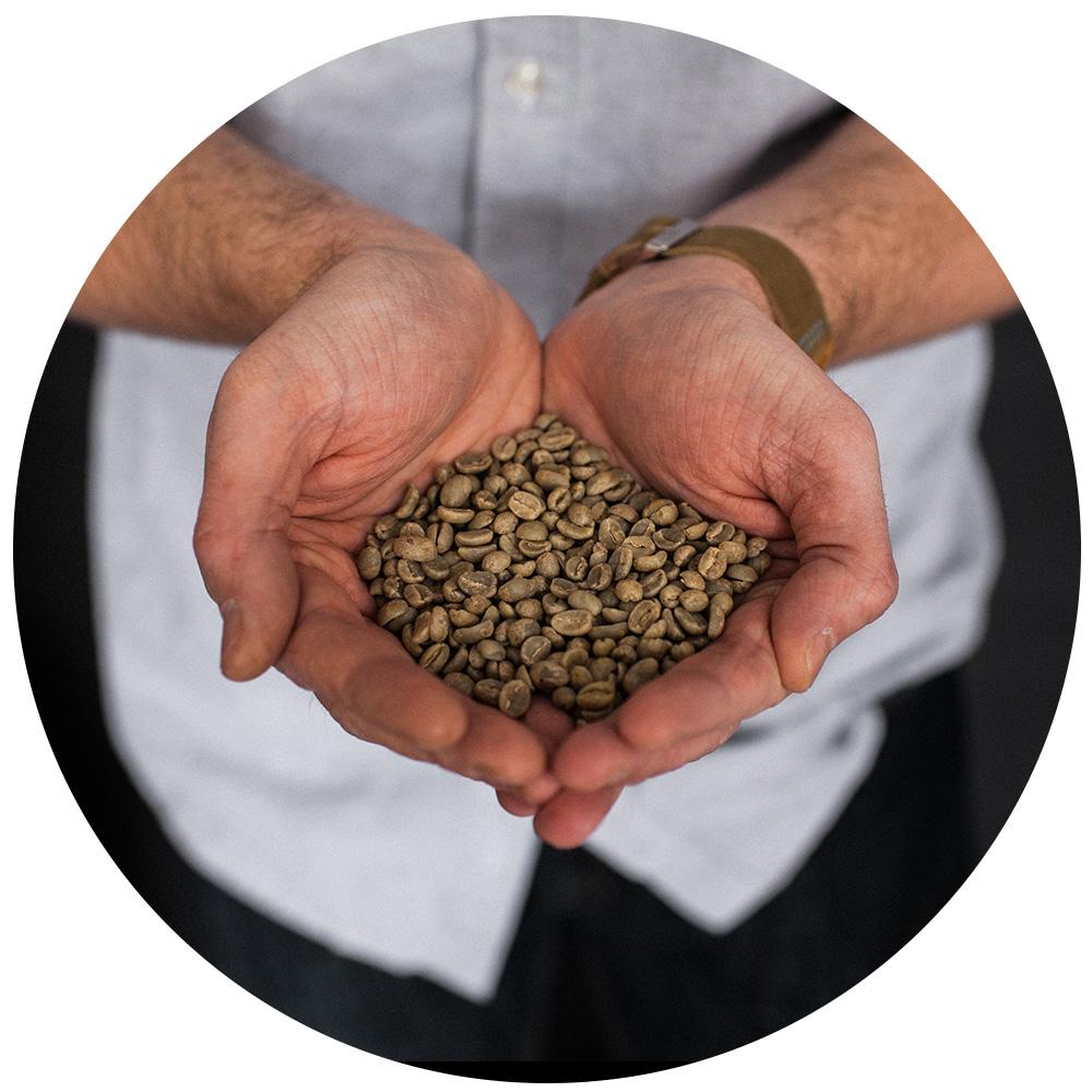 Matt Boshart of Reboot Roasting holding green unroasted coffee beans