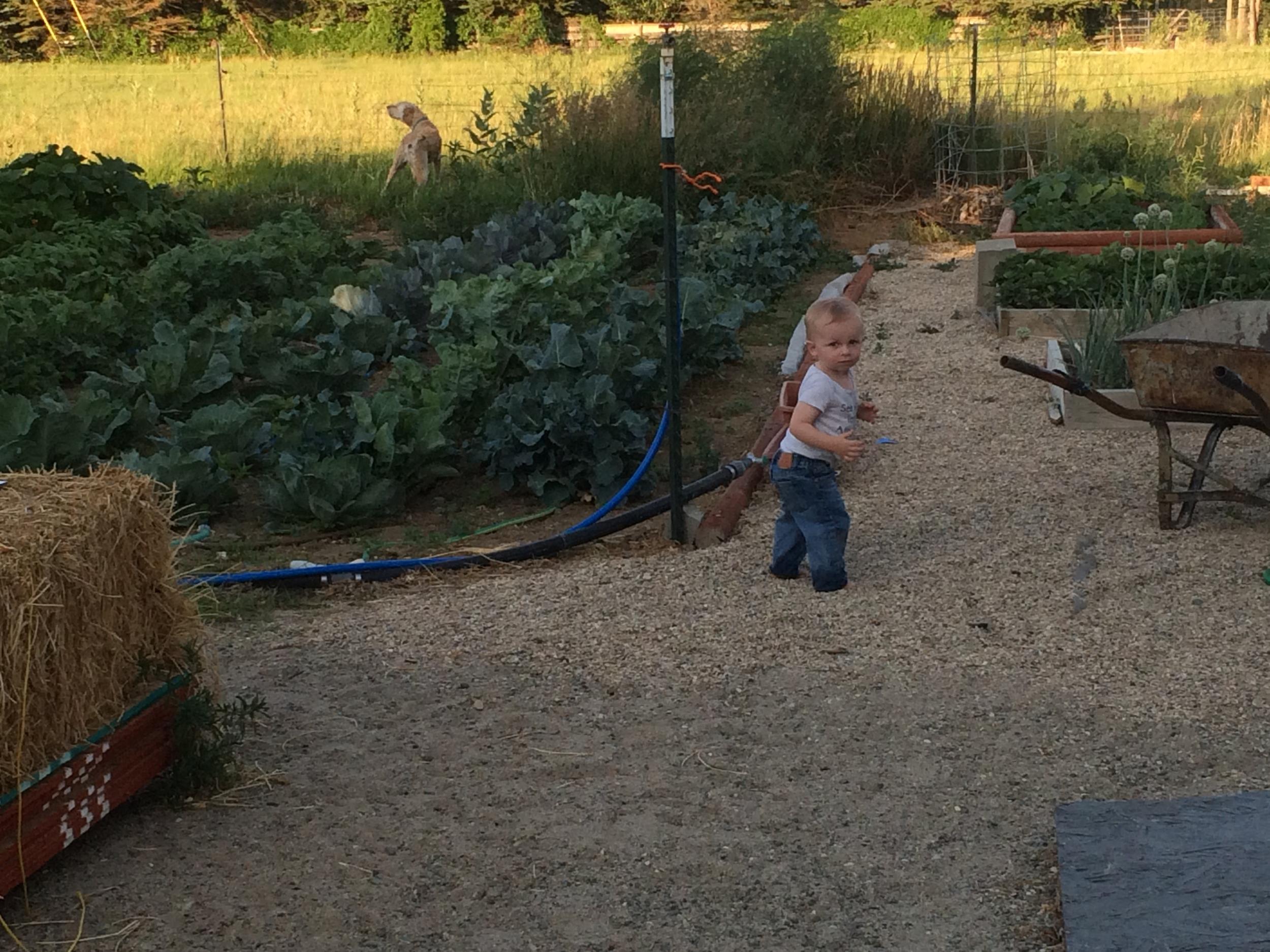Toddling around Grandma's garden, barefoot.