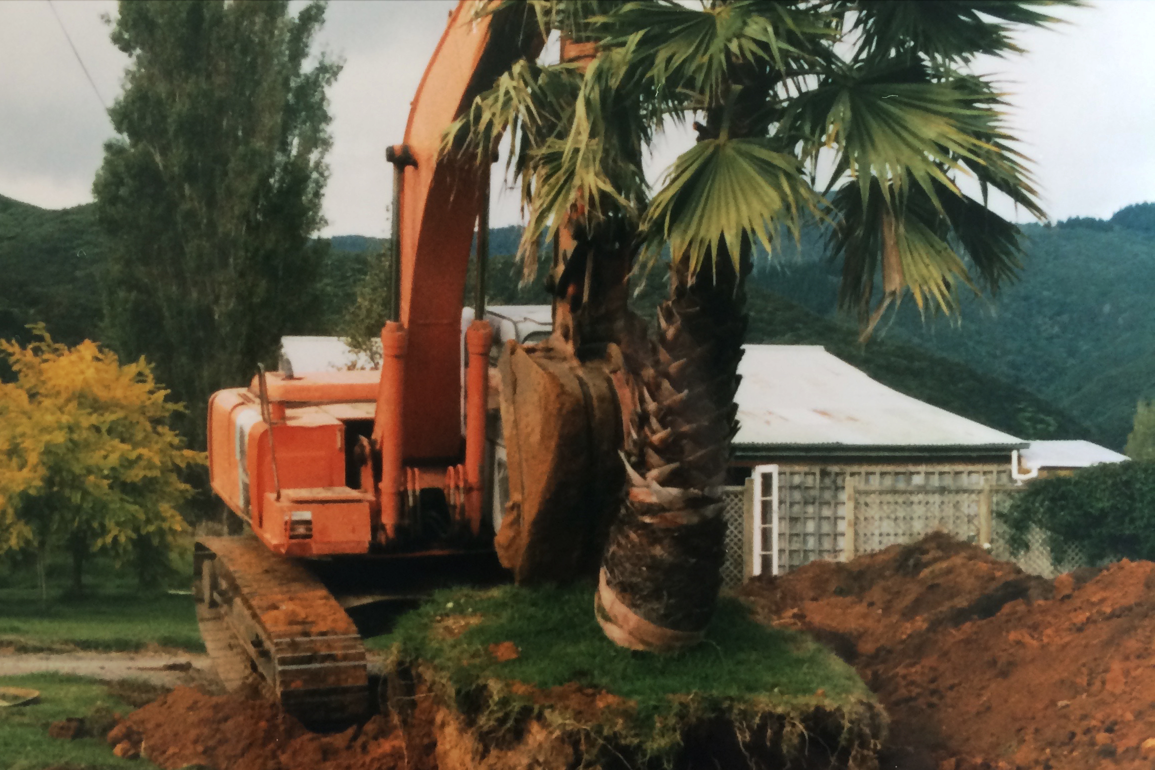 Excavation of palms to take to East Coast Point