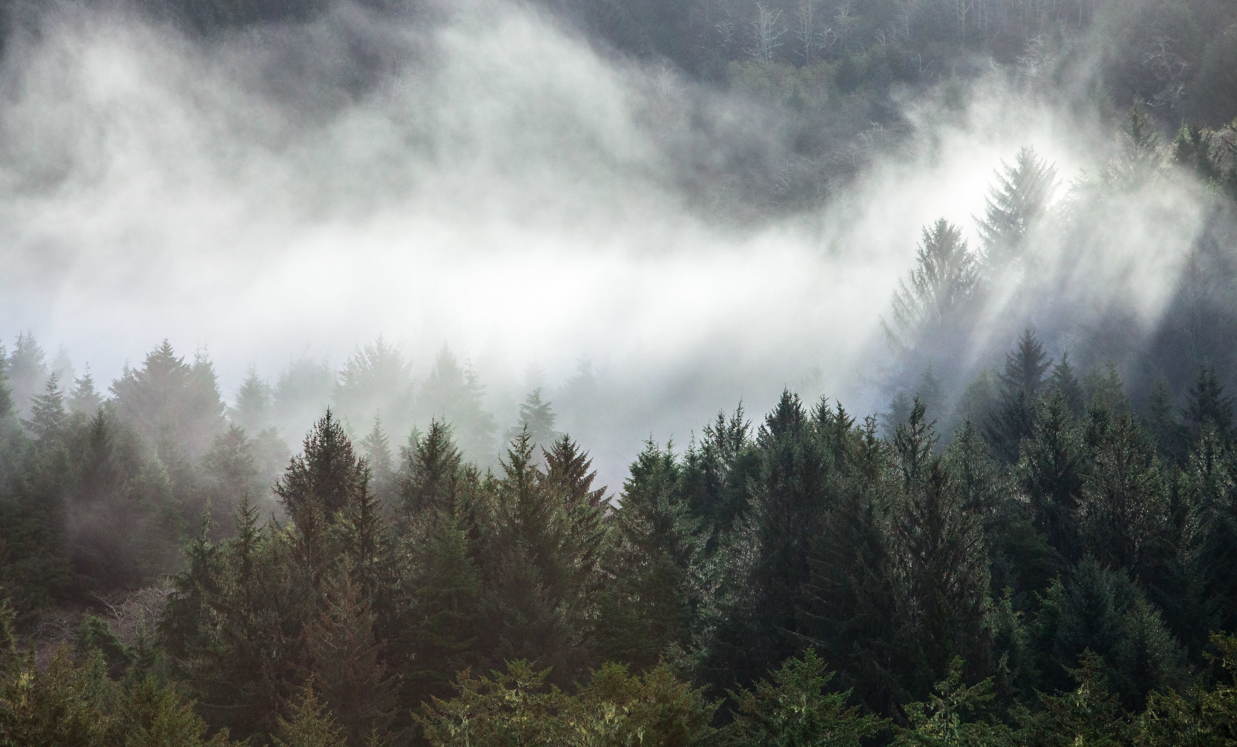 Forests-3.jpg