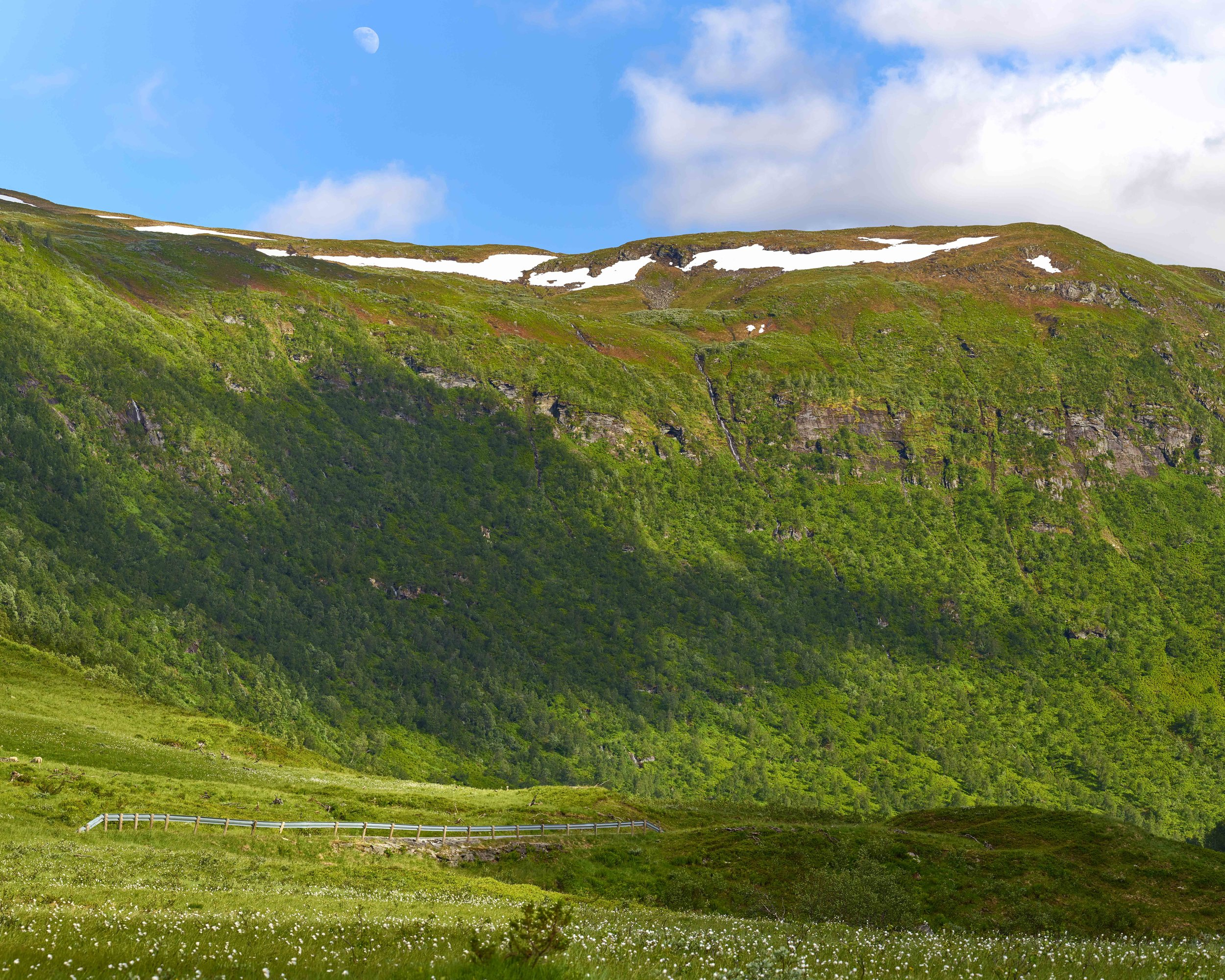 Norway Field Single Panel.jpg