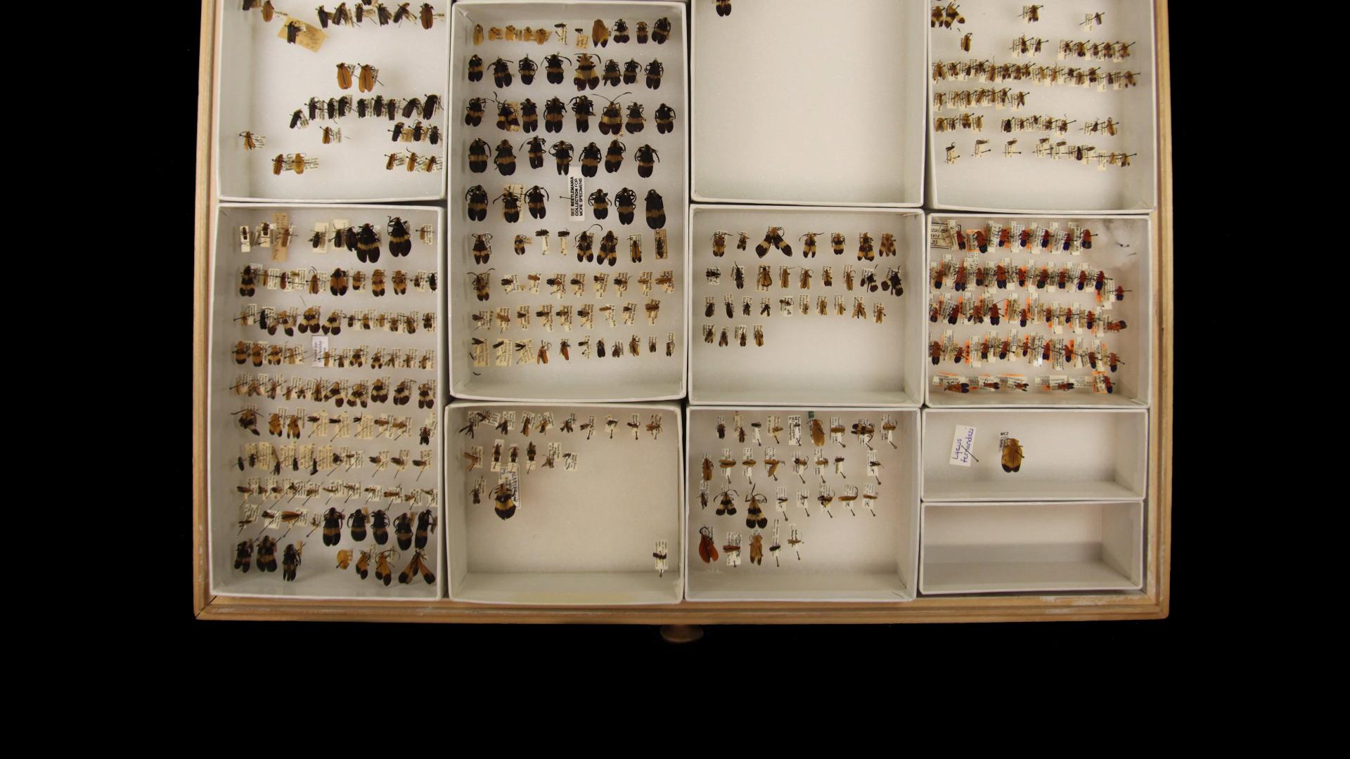 Beetle Bluffs full_beetle drawer.jpg