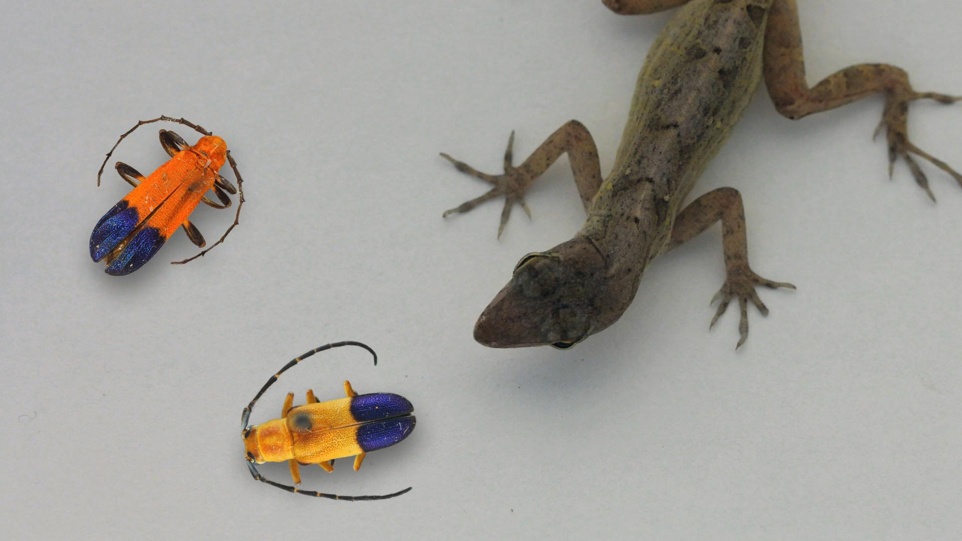 Beetle Bluffs_Kiwi and beetles4.jpg