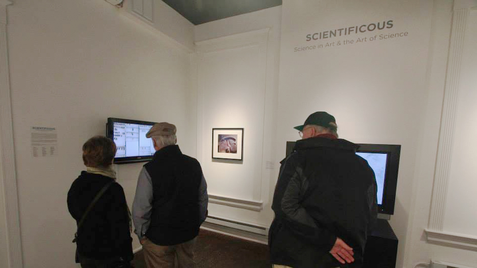 Visitors watch  Beetle Bluffs  at the SCIENTIFICOUS opening. Photograph by Christie Schism.