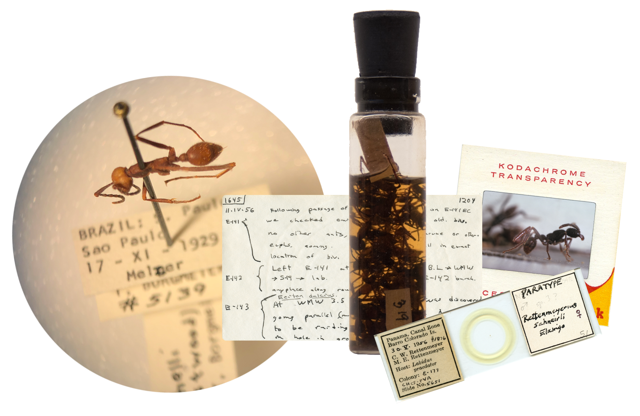 The Legacy of a Lifetime of Collecting: The Carl & Marian Rettenmeyer Story - A Traveling Interactive Natural History Exhibit