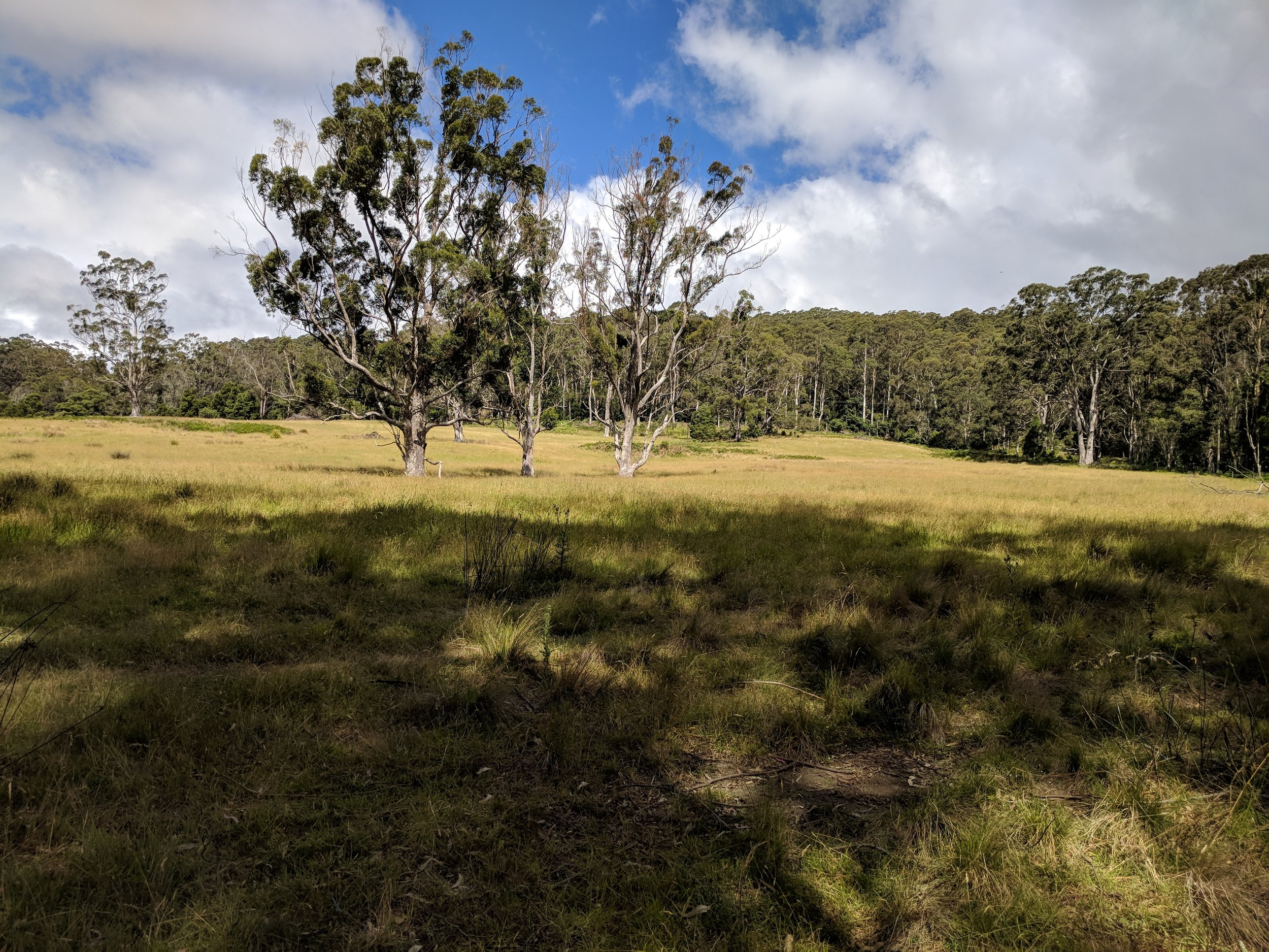One of the properties I was most excited about - East Kangaloon