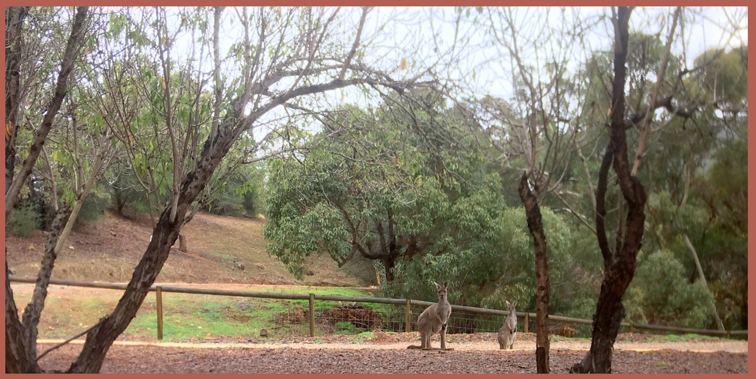 A friendly welcome from The Resident Kangaroos.